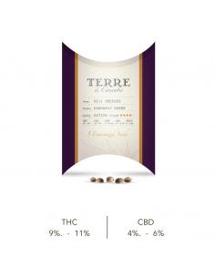 TERRE DI CANNABIS PRECOCE Semillas de Cannabis Sativa L (5 uds)