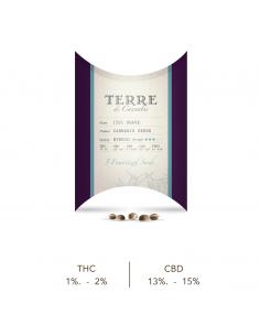 TERRE DI CANNABIS SOAVE Semillas de Cannabis Sativa L (5 uds)