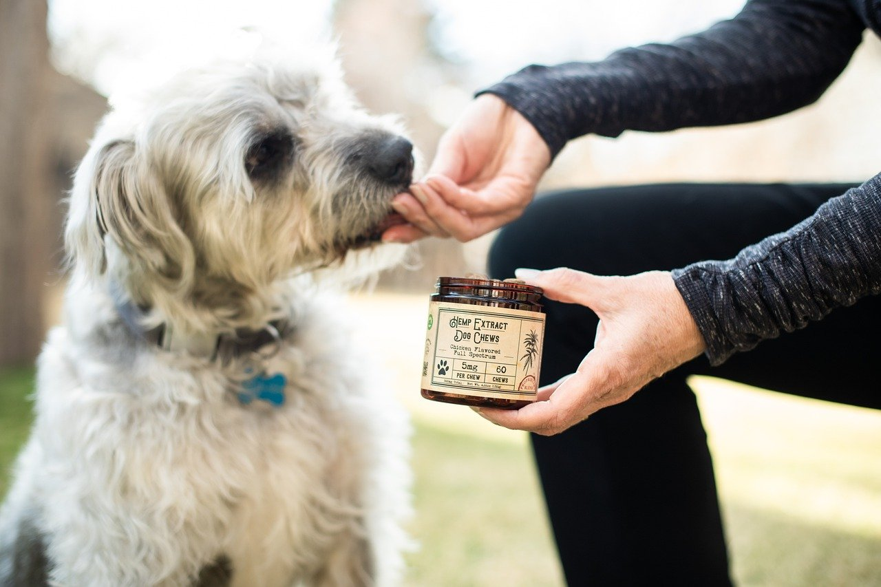cannabidiol para perros